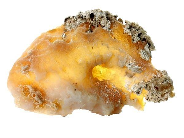 Fosilní korál, chalcedon - USA, Tampa Bay, Tampa, Florida