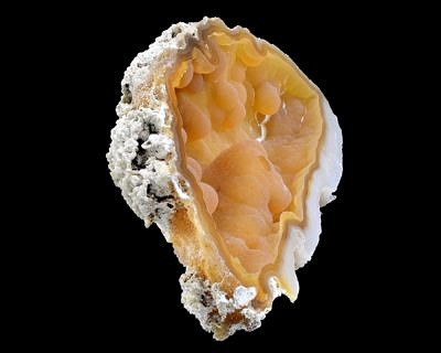 Fossil coral, chalcedony - USA, Tampa Bay, Tampa, Florida