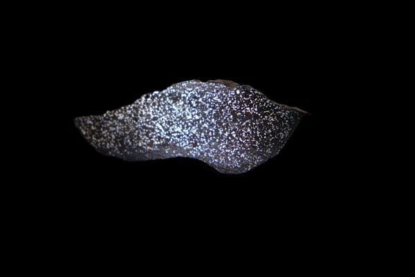 meteorit NWA 4488 (Severozápadní Afrika)